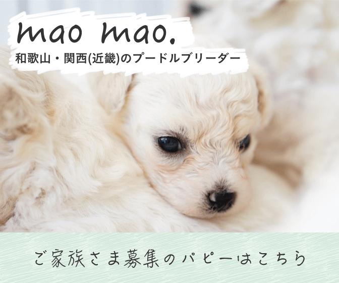 和歌山・関西(近畿)のプードルブリーダー mao mao.